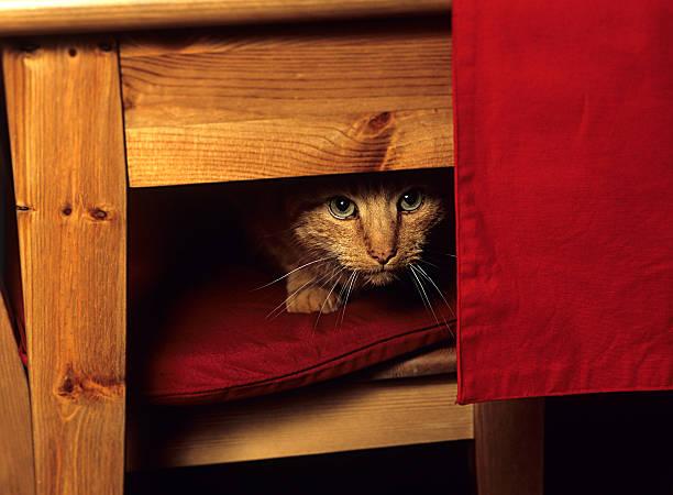 Katze unter Tisch. – Foto