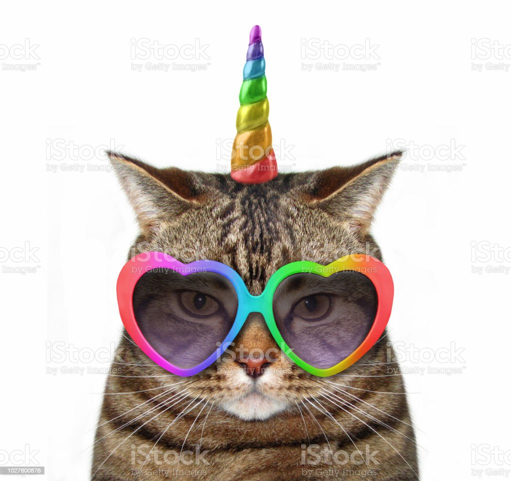 Cat unicorn in glasses stock photo