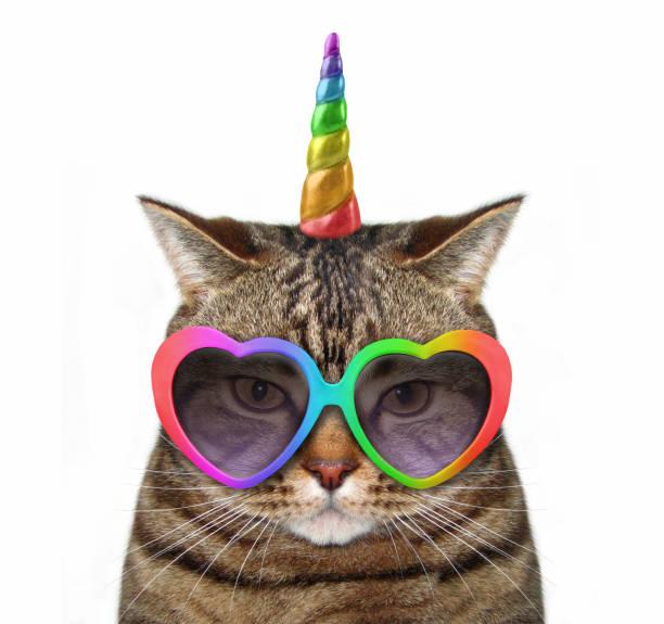cat unicorn in glasses - róg zdjęcia i obrazy z banku zdjęć