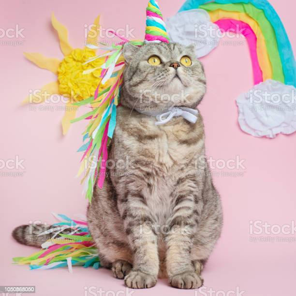Cat unicorn on a pink background in a suit rainbow horn cute kitten picture id1050868050?b=1&k=6&m=1050868050&s=612x612&h=bxkdrpvrk1c6x6nlaxoutyug4qitmmfvjq7jvjriece=