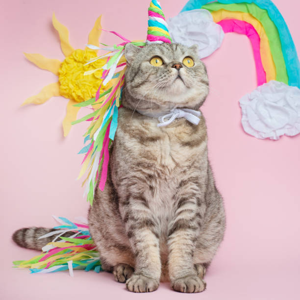 Cat unicorn on a pink background in a suit rainbow horn cute kitten picture id1050868050?b=1&k=6&m=1050868050&s=612x612&w=0&h=ph7xubfusp4afmdgsoeh0rqkh9wu5k6blz8zaedlrrg=