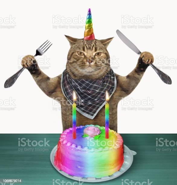 Cat unicorn with a birthday cake picture id1068679214?b=1&k=6&m=1068679214&s=612x612&h=banoug4kf9f0qzh3h8jcokzqtgqhrdsvdujvtkz152w=
