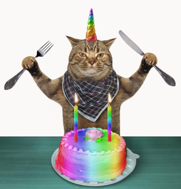 Cat unicorn with a birthday cake stock photo