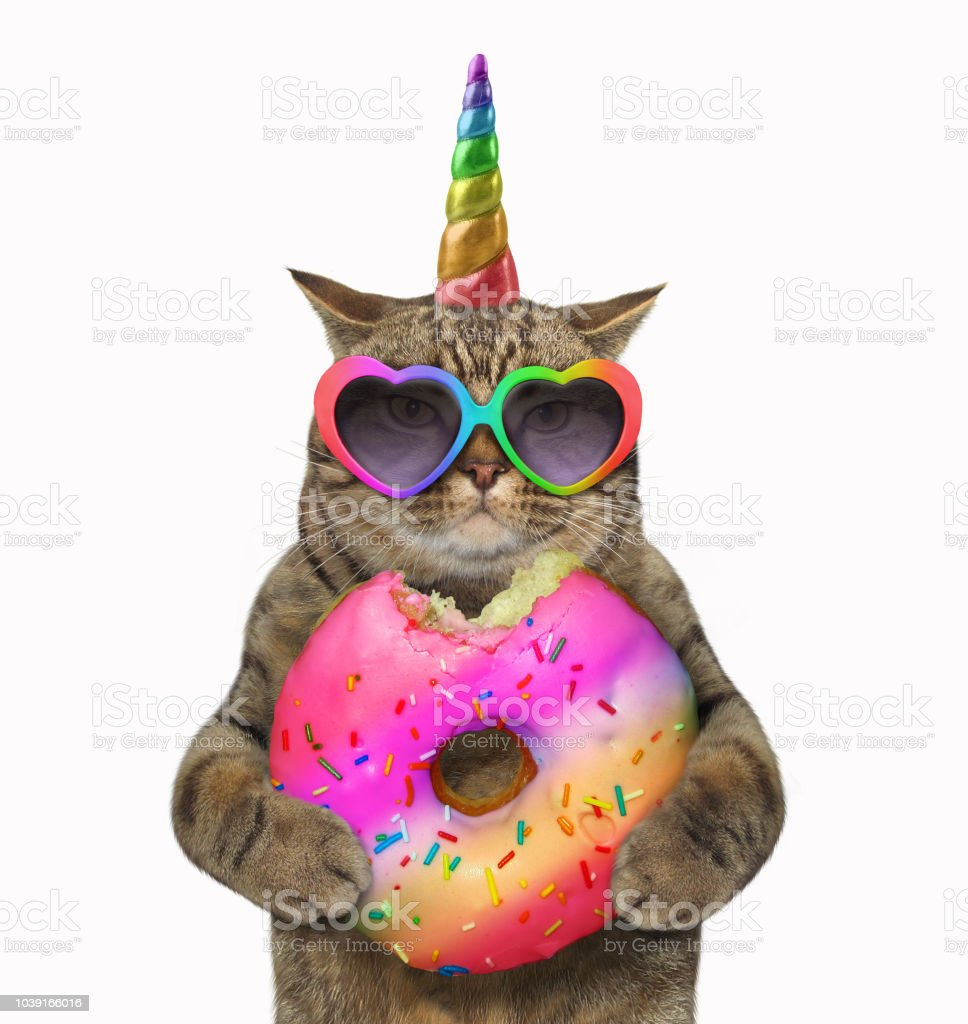 Cat unicorn with a donut stock photo