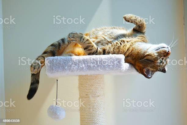 Cat upside down picture id489643538?b=1&k=6&m=489643538&s=612x612&h=tpcqkyw9eidcgtaqsw4sh8qyljb y14 xenewmn8mko=