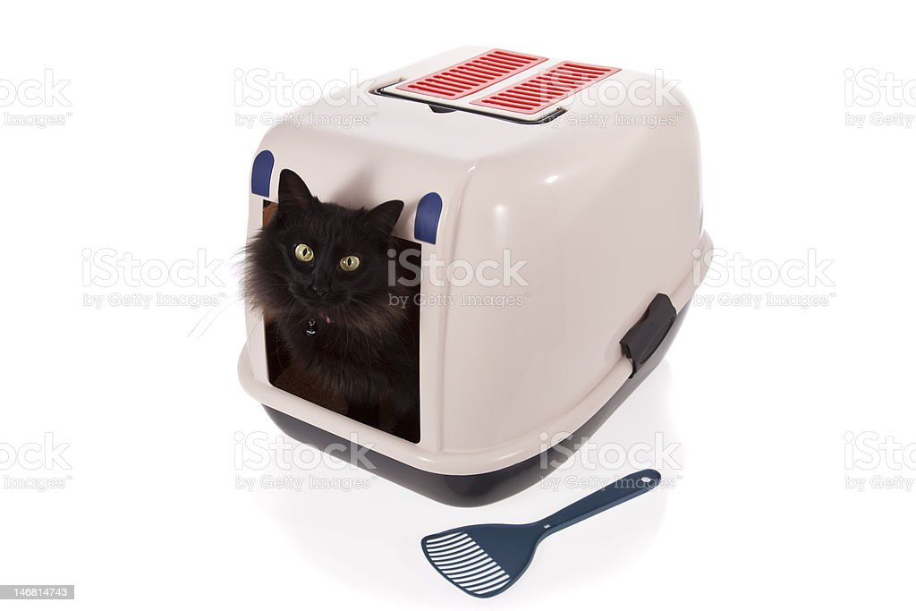 Cat using a closed litter box royalty-free stock photo