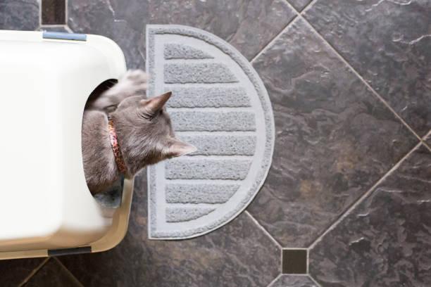 Cat using a litterbox picture id876236746?b=1&k=6&m=876236746&s=612x612&w=0&h=qe2wdv23sntcgzq9u uyjww2h43jhiobfoiw 1px2da=