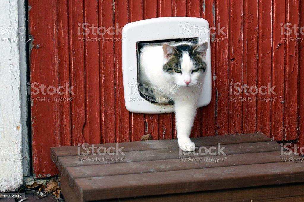 Cat using cat flap zbiór zdjęć royalty-free