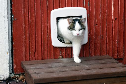 고양이 고양이 플랩을 사용 하 여 결정에 대한 스톡 사진 및 기타 이미지