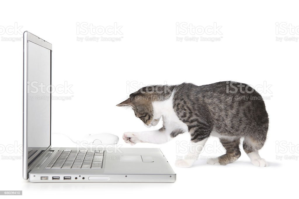 Cat Using Laptop Computer stock photo