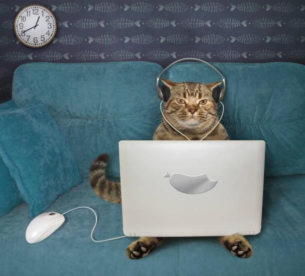Cat using laptop on sofa 3 picture id1252764232?b=1&k=6&m=1252764232&s=612x612&w=0&h= m  tf0oyggqi8p5myzvj1d2wvxewzkw2y171hsa610=