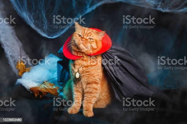 Cat vampire on black background halloween theme picture id1023653480?b=1&k=6&m=1023653480&s=612x612&h=7eht9huhy2isevabzkvdhbzxbn8bav5i9tjjgidim2o=