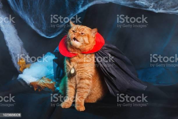 Cat vampire on black background halloween theme picture id1023658328?b=1&k=6&m=1023658328&s=612x612&h=hv9qqorcvyf3wxc0nn18cnt4nrctowvqvj fdrjplja=