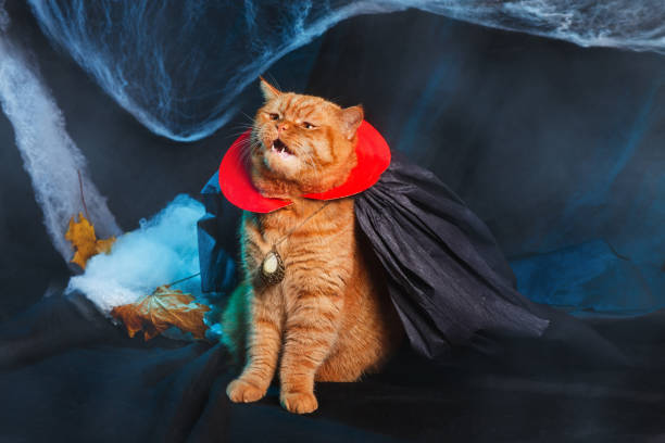 Cat vampire on black background. Halloween theme. Red Cat vampire on black background. Halloween theme. halloween cat stock pictures, royalty-free photos & images