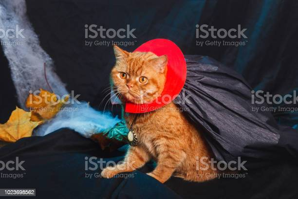 Cat vampire on black background halloween theme picture id1023698562?b=1&k=6&m=1023698562&s=612x612&h=9ukz3m0oh5nyhwtdol1cqif23mhg0iidzq0nlxigt5s=
