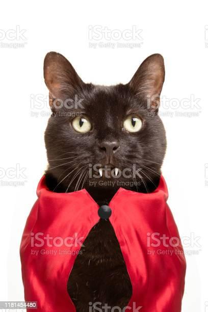 Cat vampire picture id1181454480?b=1&k=6&m=1181454480&s=612x612&h=pm9xf6okltn db93odnbacn3qnuefla9dl8khldoyrg=