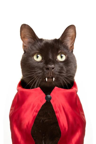 Cat Vampire stock photo