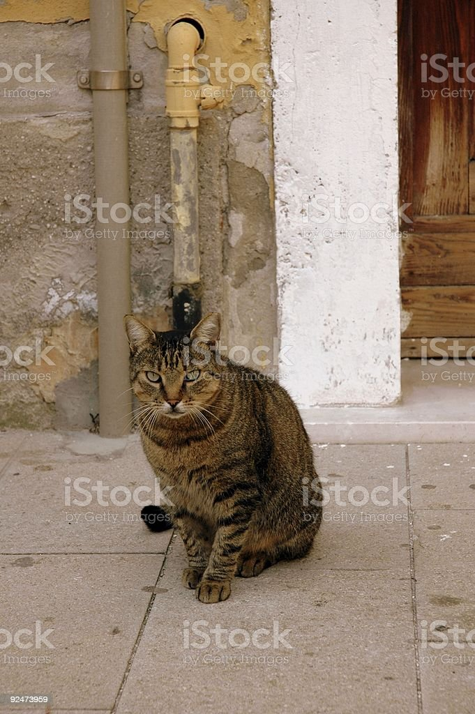 Cat, Venice, Italy. royalty-free stock photo