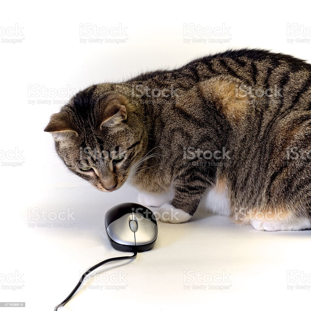 cat versus mouse stock photo