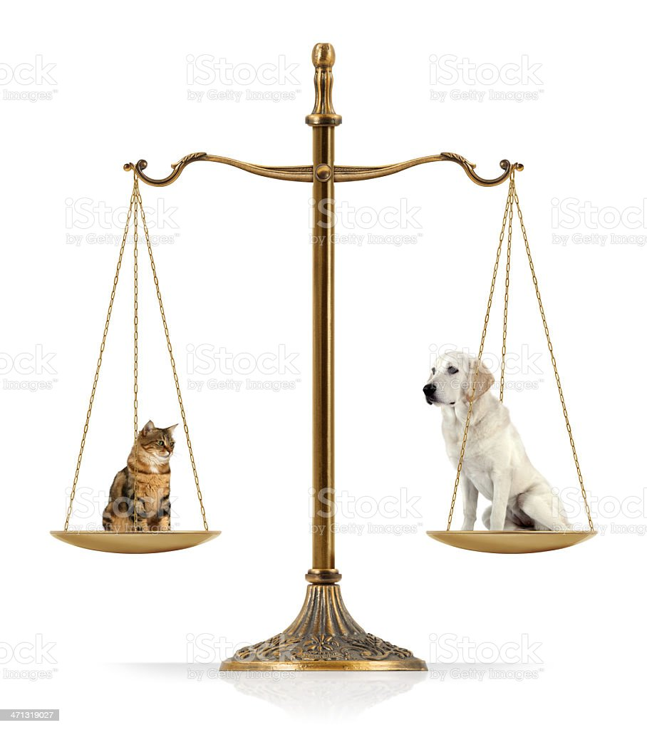 Cat vs. Dog royalty-free stock photo