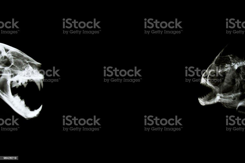 Cat vs Piranha royalty-free stock photo