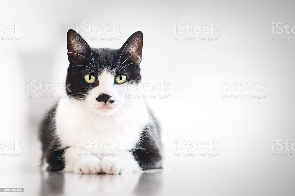 Cat waiting for food stock photo