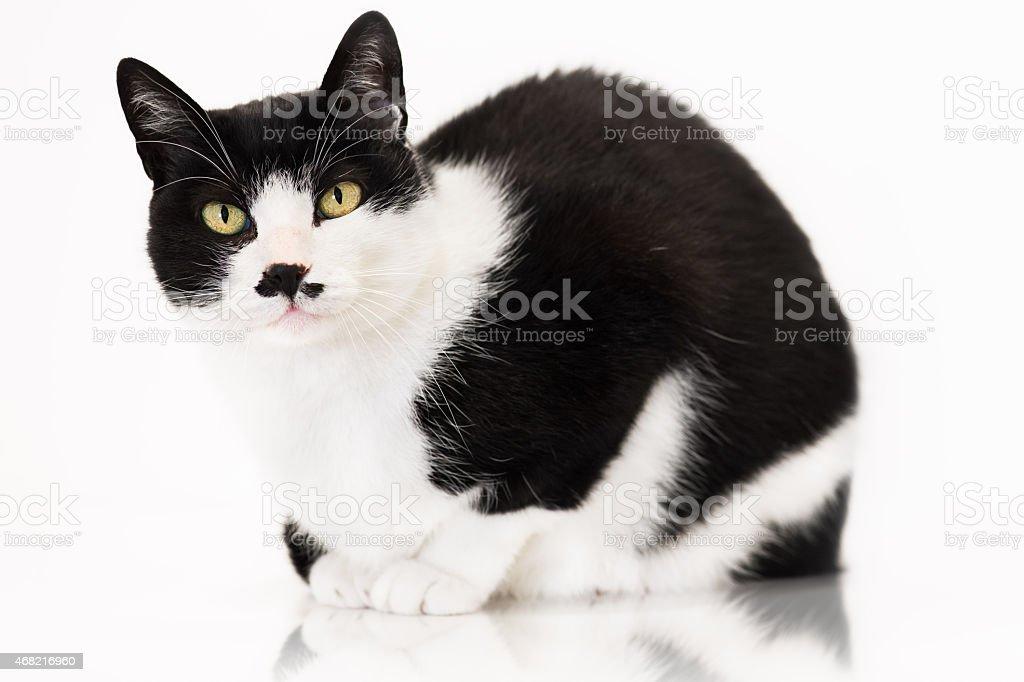 Esperando a comida de gato branco - foto de acervo