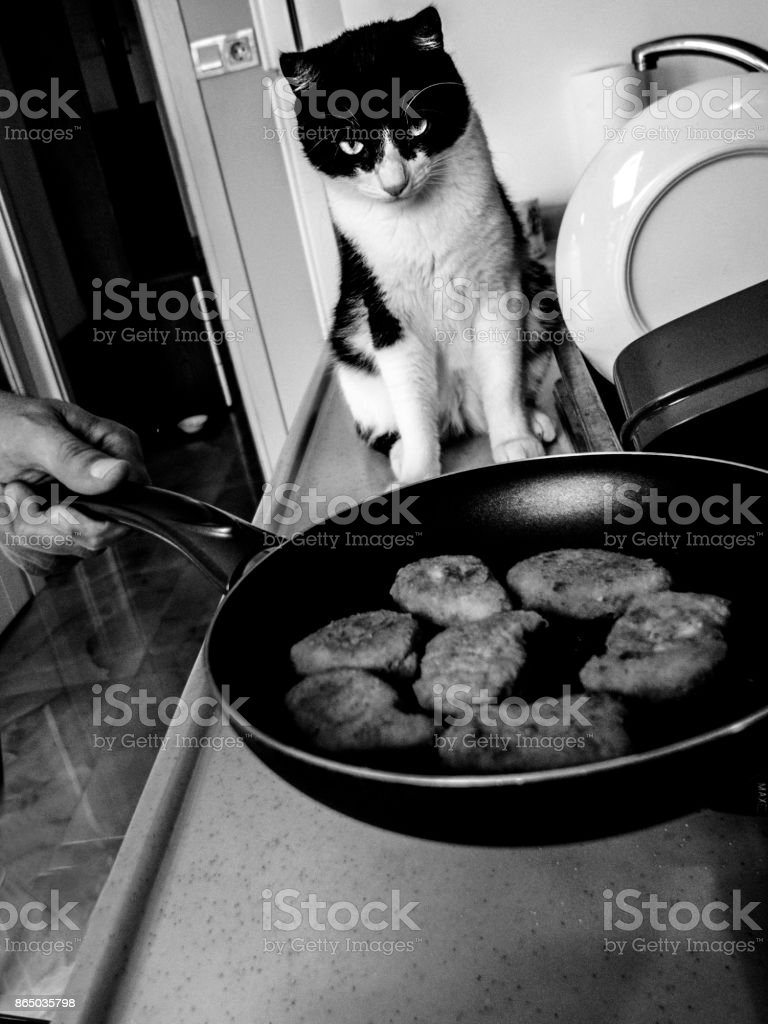 Cat waiting for nuggets stock photo