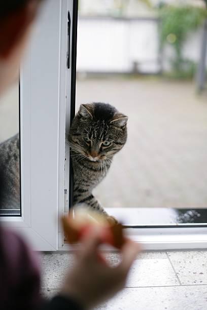 Cat waiting stock photo