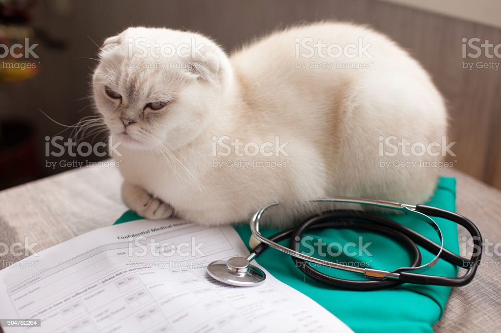 Cat waits to see the veterinarian royalty-free stock photo