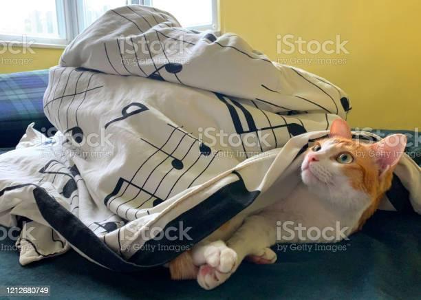 Cat wake up morning picture id1212680749?b=1&k=6&m=1212680749&s=612x612&h=2tqsoekqja9abveozowhzuctmpjd jkpqhbroyoixoc=