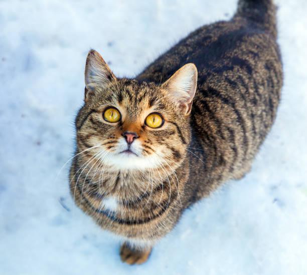 Cat walking in the snow picture id857768520?b=1&k=6&m=857768520&s=612x612&w=0&h=dog1innwsmogppqibilpiqesbcxw9idvbagk8owtvis=