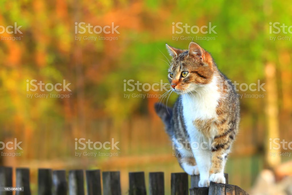 Cat walking on fence stock photo