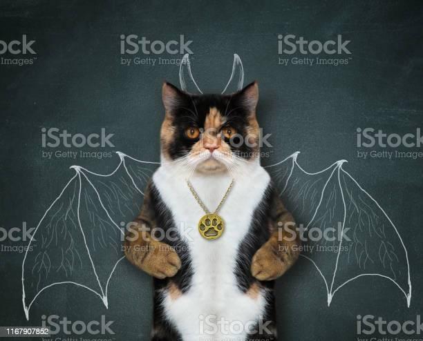 Cat wants to be bat 2 picture id1167907852?b=1&k=6&m=1167907852&s=612x612&h=faztrfmo mgt cyo ahczmoe3gavobuz02jtgerh6hu=