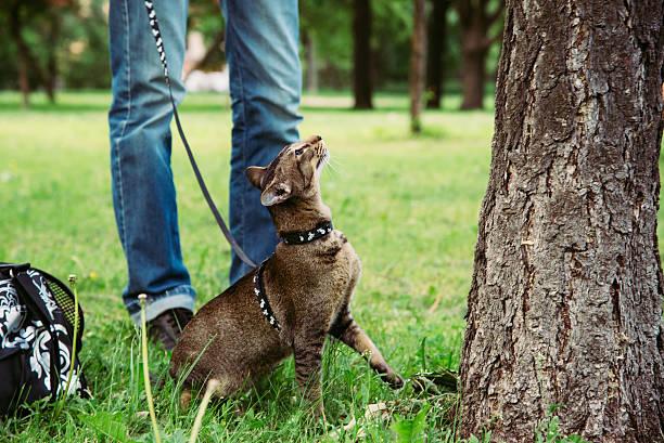 katzen möchte sie die tree - katzengeschirr stock-fotos und bilder