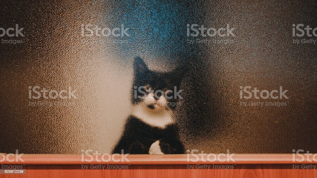 Cat Wants To Come Inside stock photo