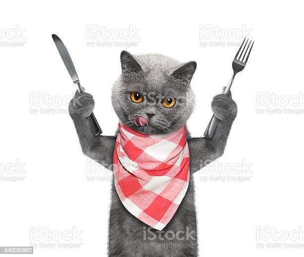 Cat wants to eat and hold knife and fork picture id540090962?b=1&k=6&m=540090962&s=612x612&h=xsqeuv3pyscokd 2b5irk azaru hlesr1pgjmev8he=