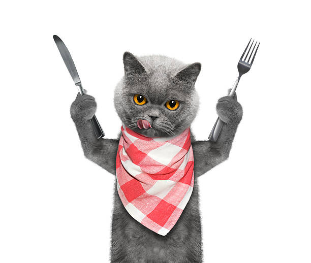 cat wants to eat and hold knife and fork stock photo