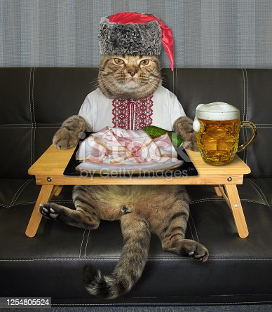 539672394 istock photo Cat wants to eat salo with beer 2 1254805524