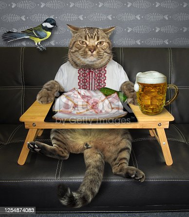539672394 istock photo Cat wants to eat salo with beer 1254874083