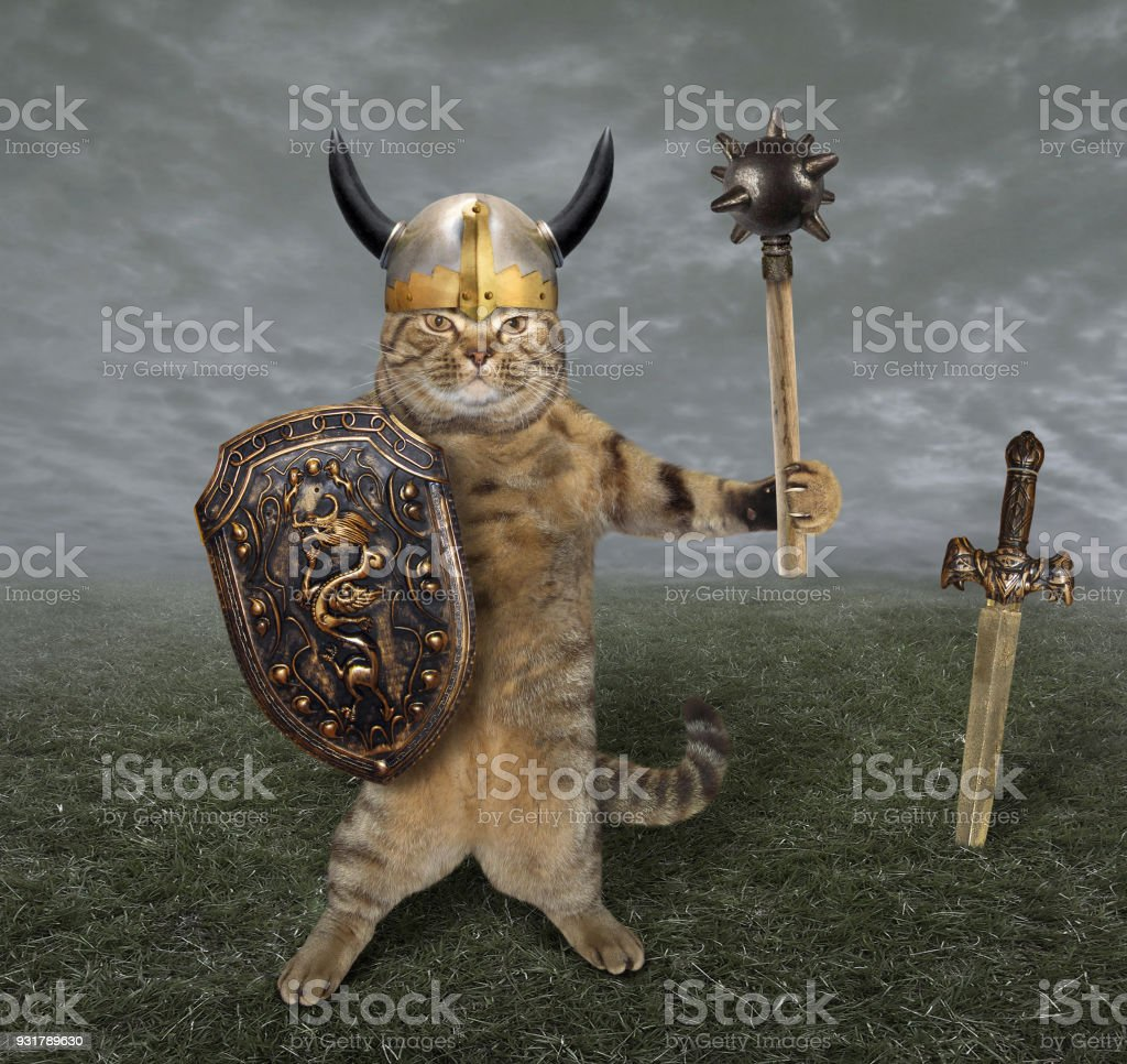 Cat warrior in a field stock photo