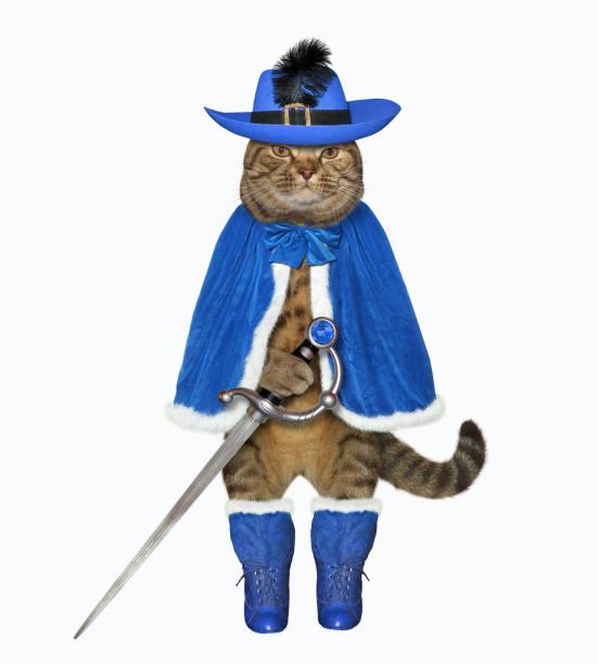 Cat warrior in blue with a sword stock photo