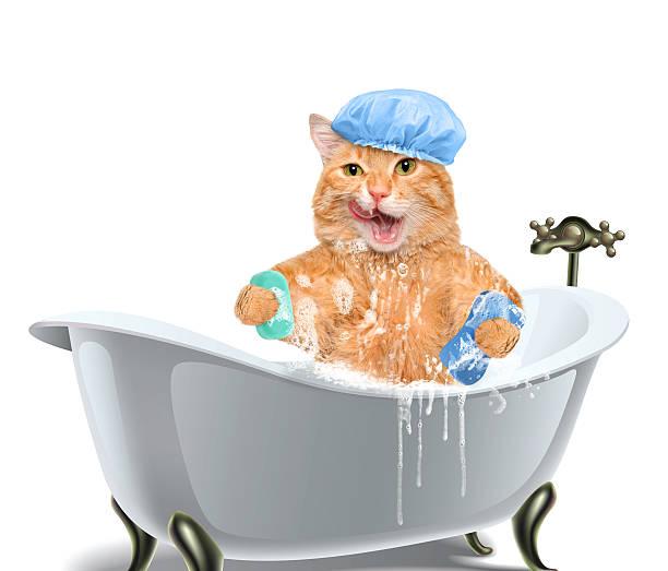 Cat washes picture id476732818?b=1&k=6&m=476732818&s=612x612&w=0&h=7xtojtrb sinss18gijj foldecvyy51dkdw89orcvw=