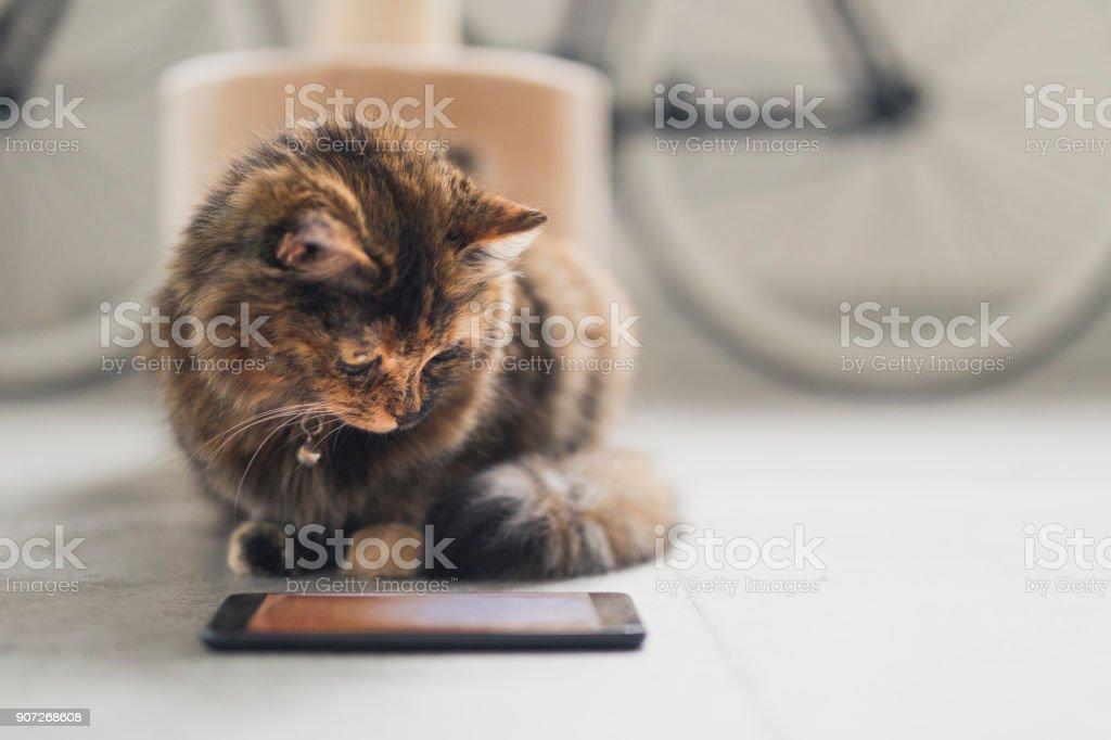 Katze, die gerade ein Video für Katzen – Foto