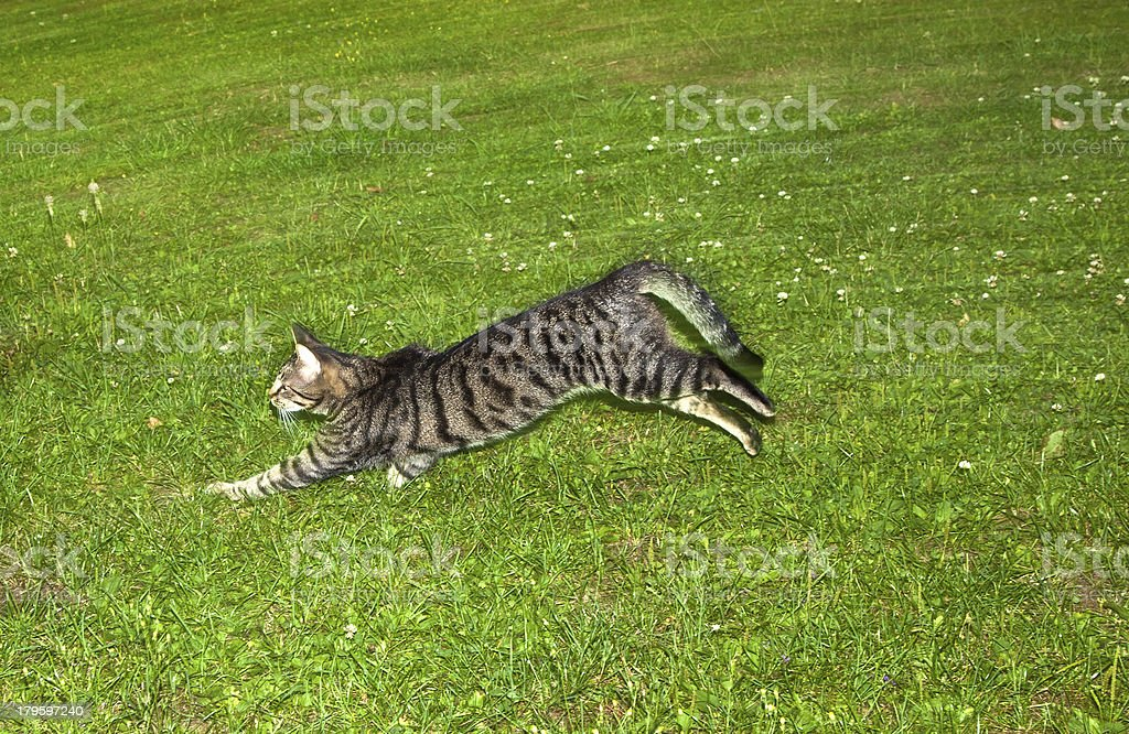 cat watching and hunting by night stock photo
