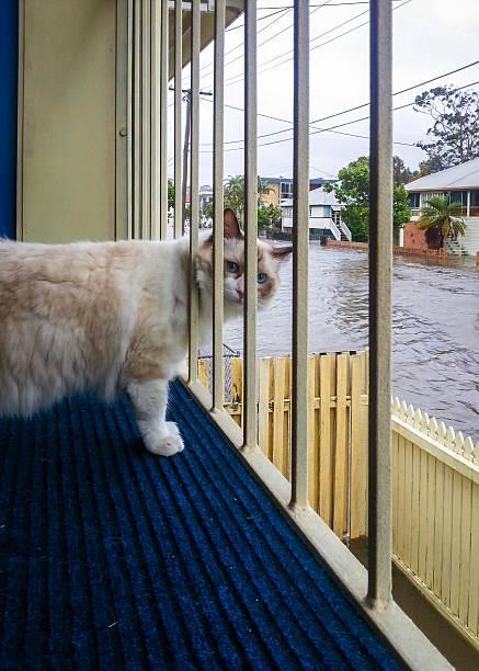 Cat Watching Flood stock photo