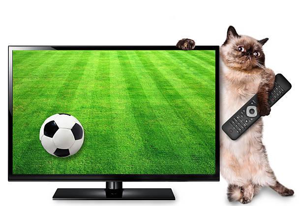 katze beobachten smart tv übersetzung des football-spiel. - desktop hintergrund hd stock-fotos und bilder