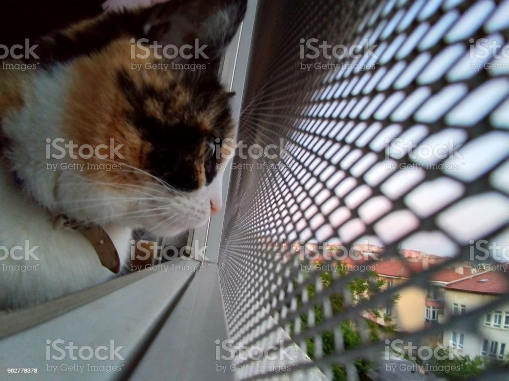 cat watching street - Foto stock royalty-free di Ambientazione esterna