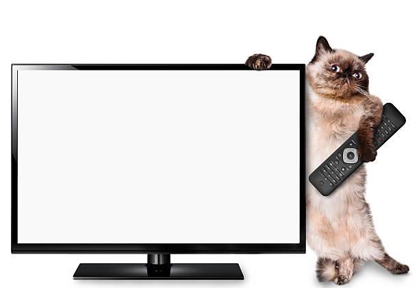katze fernsehen - desktop hintergrund hd stock-fotos und bilder