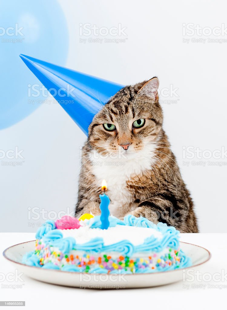 Cat Happy Birthday Lizenzfreies Stock Foto